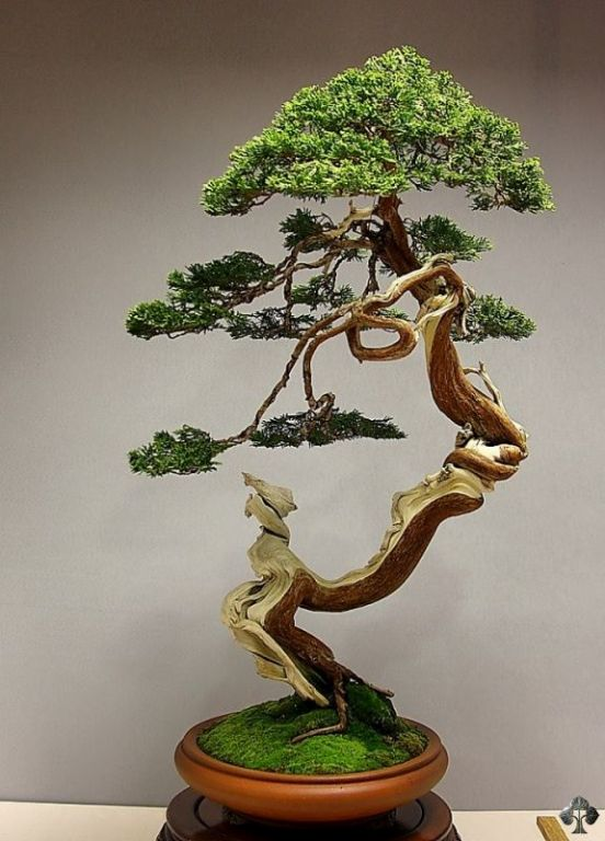 top 10 bonsa du jour bonsai empire
