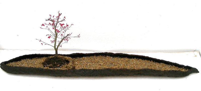 Acer bonsai in the landscape