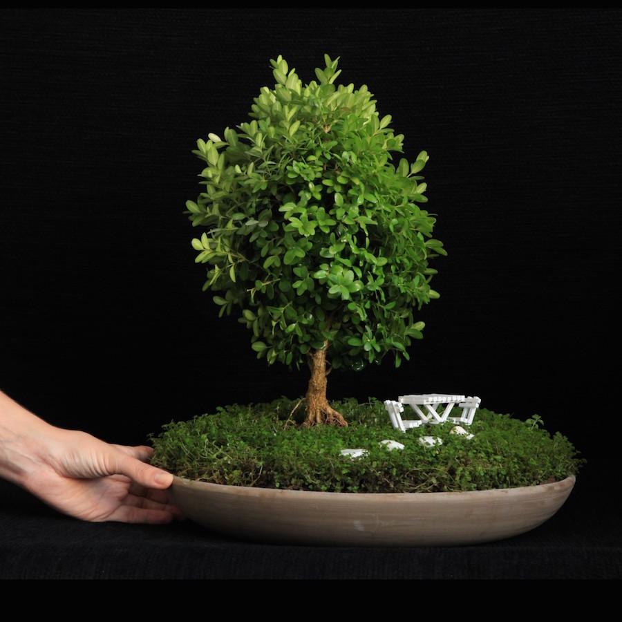 Jardins miniatures de bonsa bonsai empire - Jardin de bonsais ...