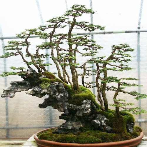Rock bonsai