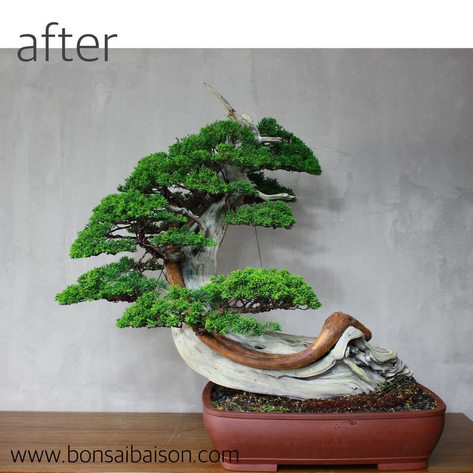 Bonsa repr sentant la grande vague bonsai empire for Bonsai artificiel grande taille