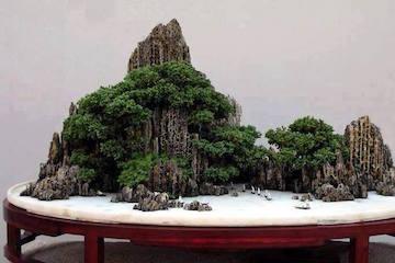 Arbre vs bonsa bonsai empire for Landscaping rocks vallejo ca