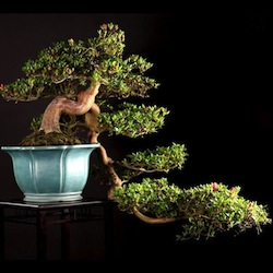 Video Bonsai