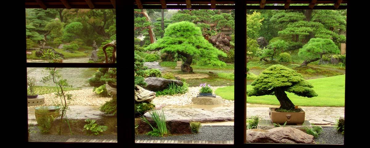 Jardin de bonsaïs japonais