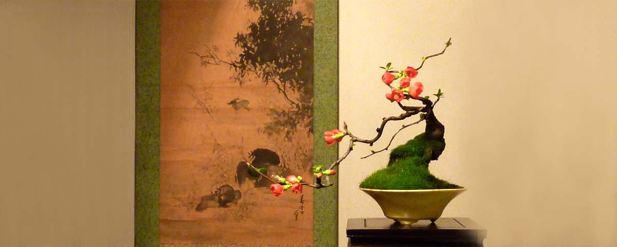 Floraison bonsaï