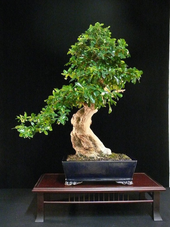 training bonsai in the ground guide