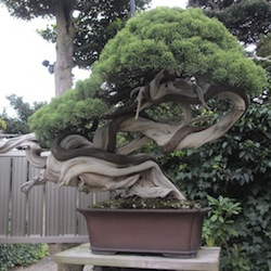 Jardins Japonais Et Bonsa Au Japon Bonsai Empire