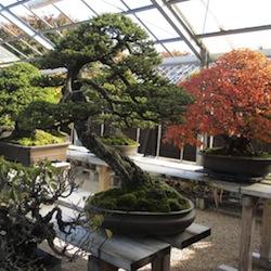 Jardins japonais et Bonsaï au Japon - Bonsai Empire