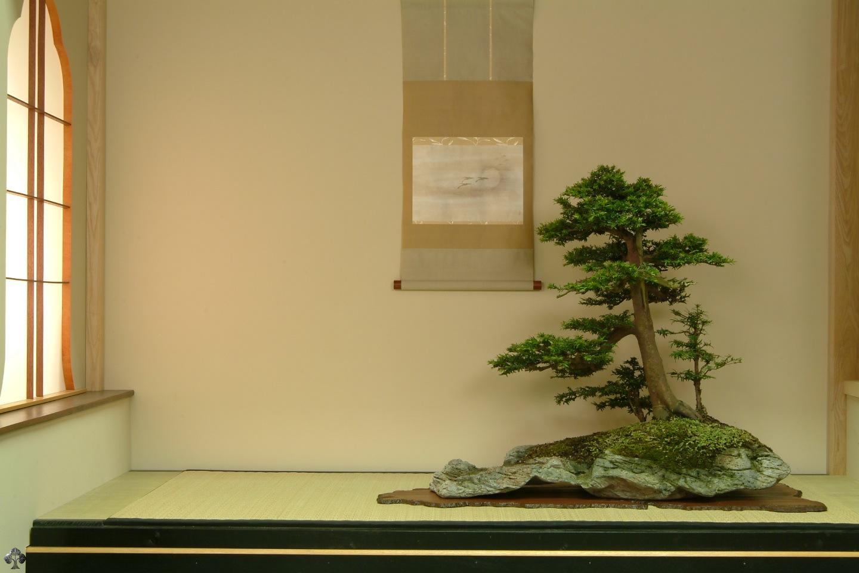 bonsa239 wallpaper bonsai empire
