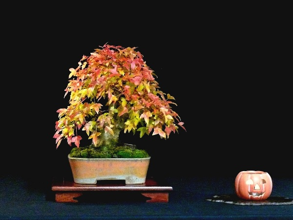 Halloween Bonsai tree
